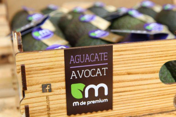 Avocats – tropical millenium