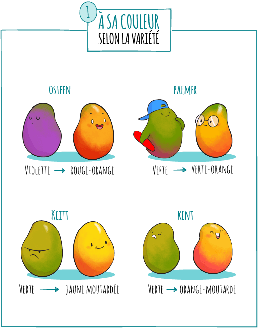 illustrations mangue fruit