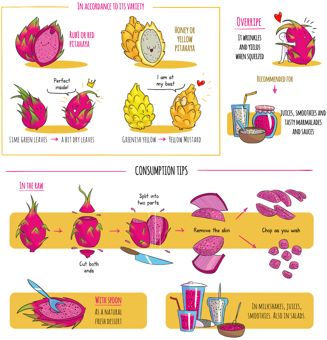 Illustrations of the rubï or red pitaya